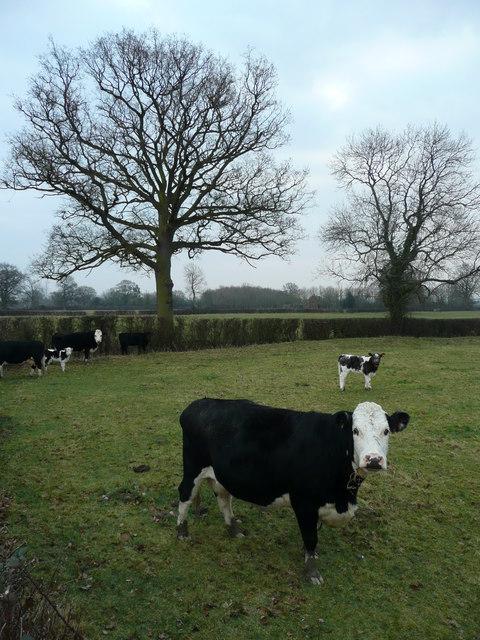 Pasture in mid winter