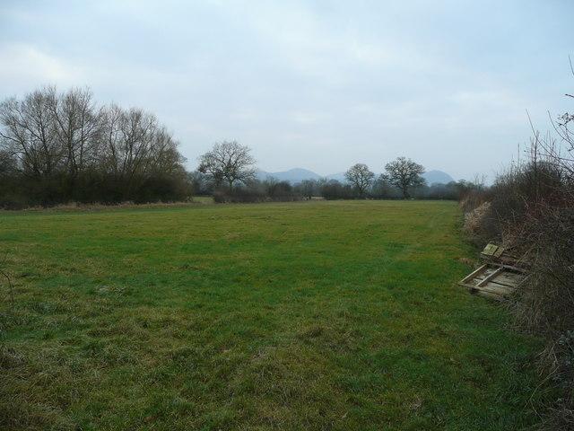 Severn pastures