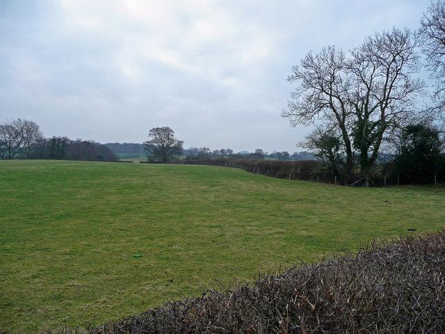 Pasture near Coedway