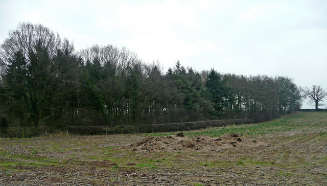 Edge of Pecknall Coppice