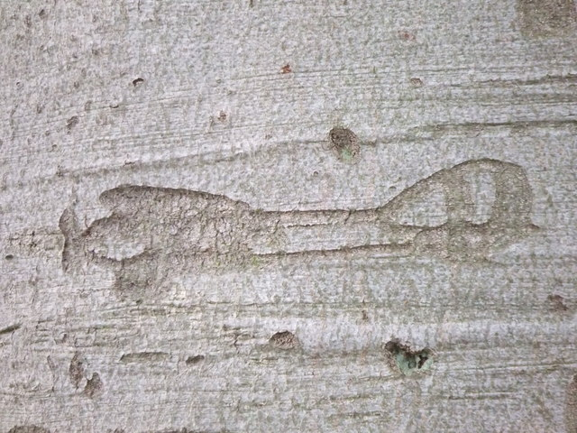 Aircraft carving in tree bark