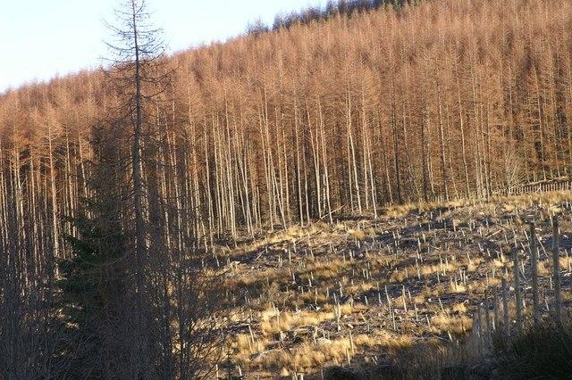 Forestry in Glen Muick