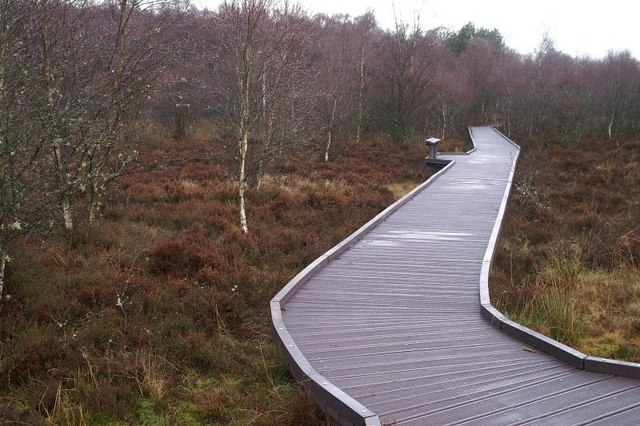 Woodland at Westmuir
