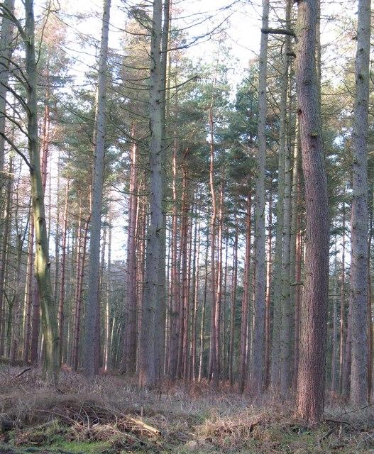 Hawkshaw Gill Wood