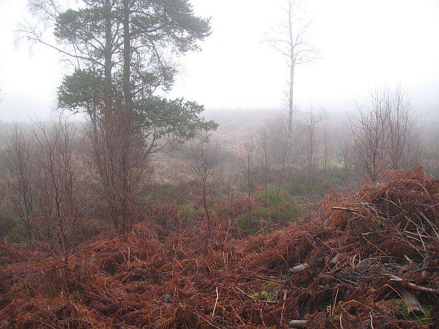 Restored forest, Glen Garry