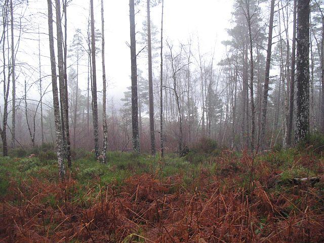 Open woodland above the Allt Bolinn