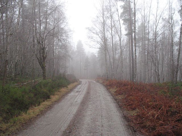 Forest road, Glen Garry