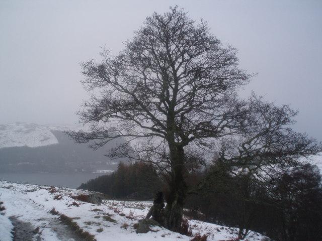Tree beside the track in Glen Vorlich.