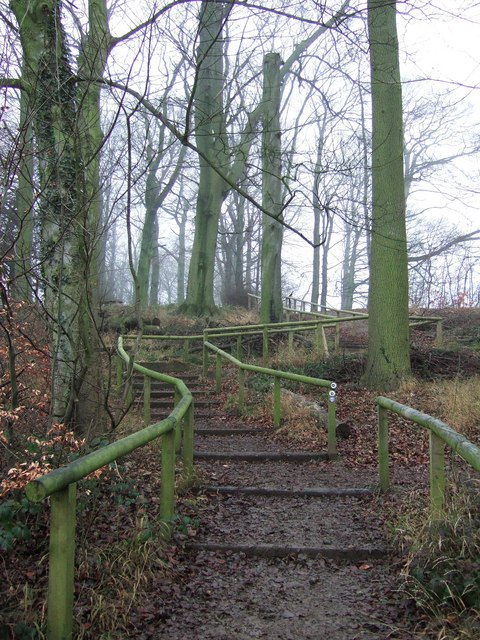 Steps in Lady Spencer's Wood