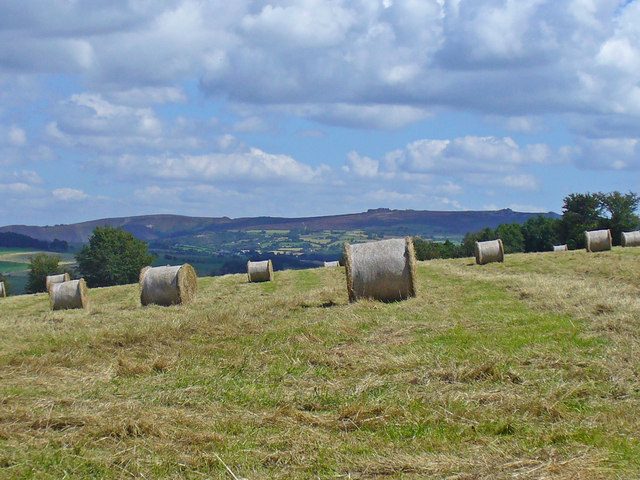 Hay Meadow under Corndon Hill