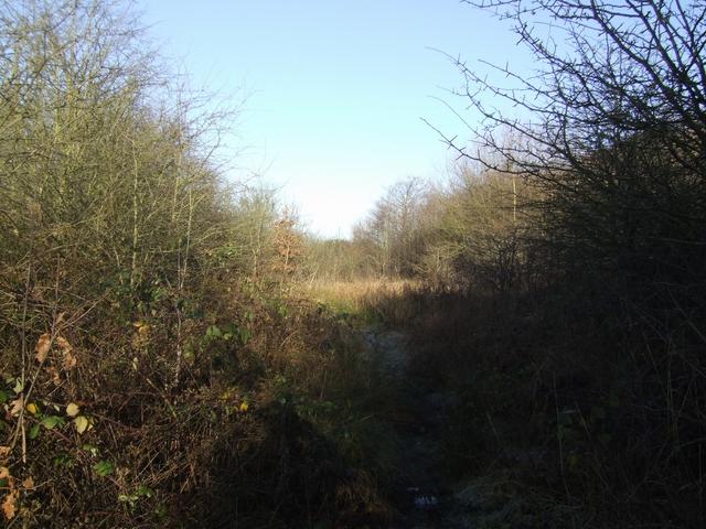 Footpath in the Littleton Leisure Park