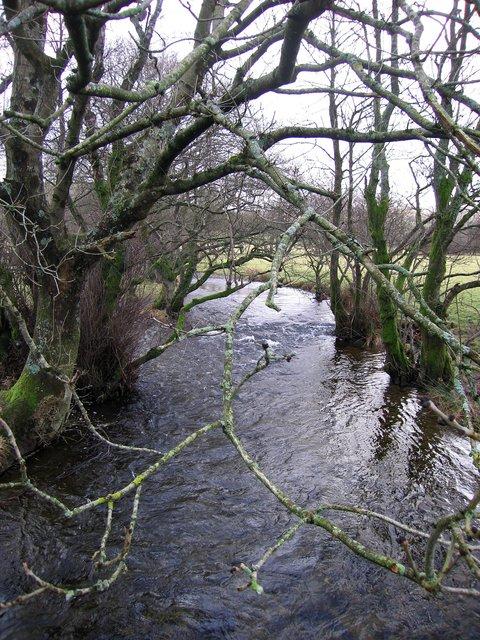 Afon Teifi in full flow