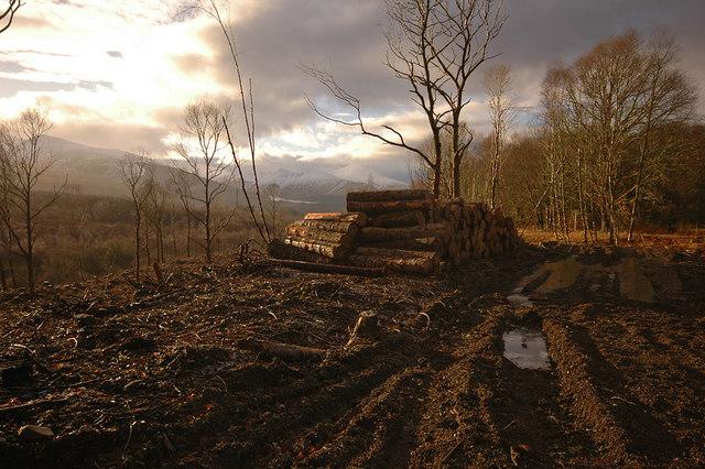 Tree felling in Glen Roy