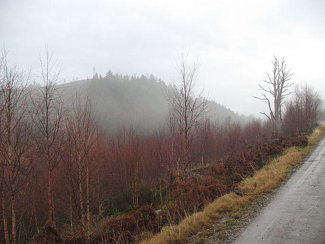 Restored forest
