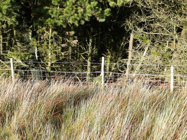 Forest boundary on Mynydd Llywd