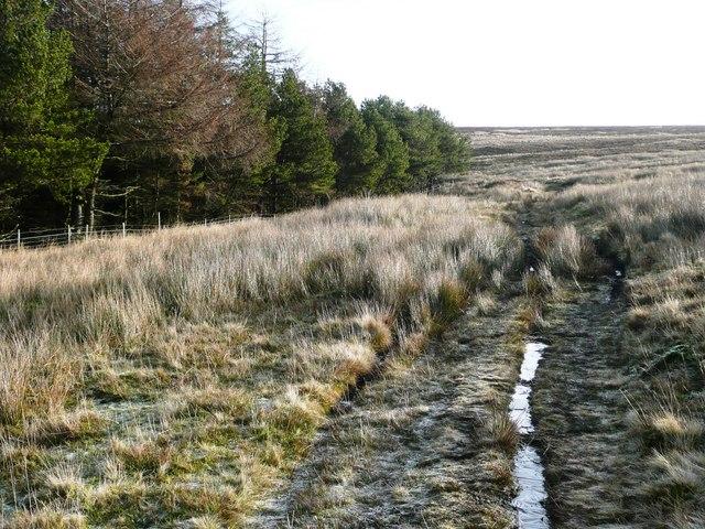 On Mynydd Llwyd