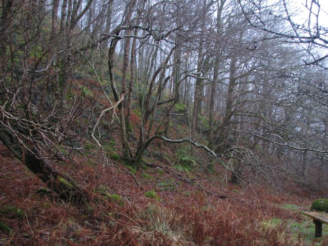 Woodland, Doon of Castramont
