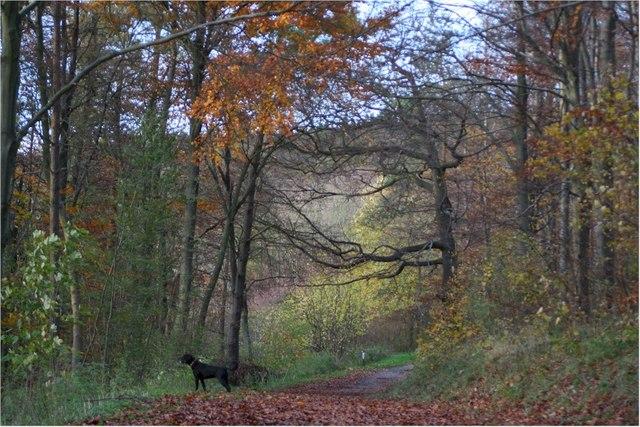 Wendover woods in Autumn