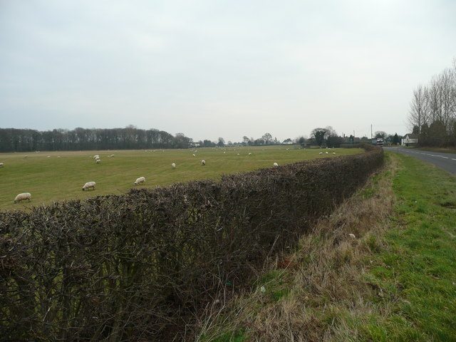 Sheep pasture by the A458