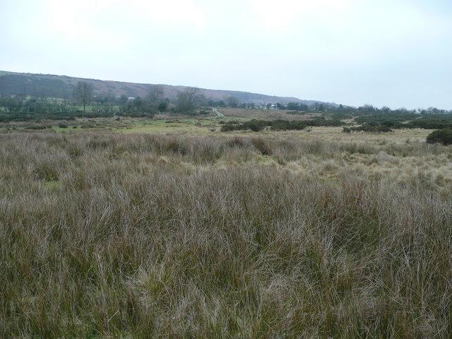 Moorland at Stapeley