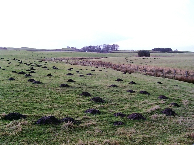 Fields near Cleugh Head