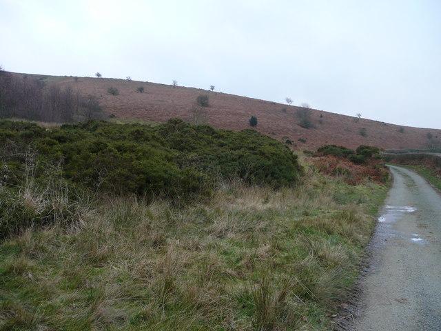 South-west flank of Heath Mynd