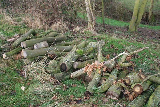 Log pile by the River Devon