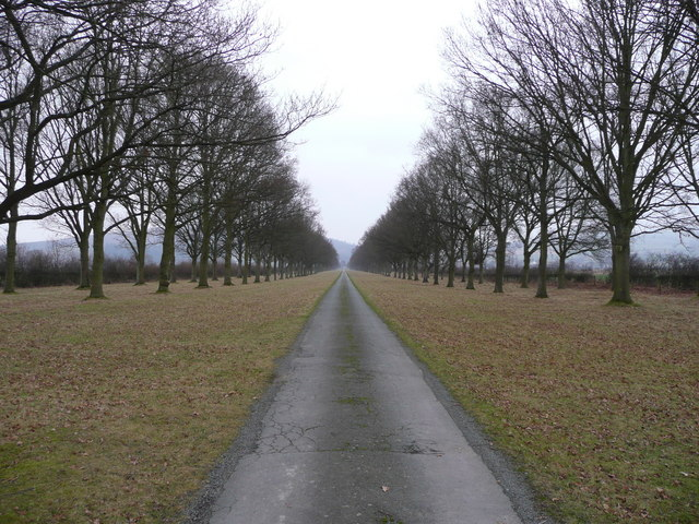 Avenue at Linley Hall