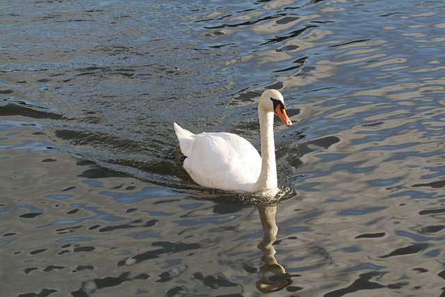 High speed swan