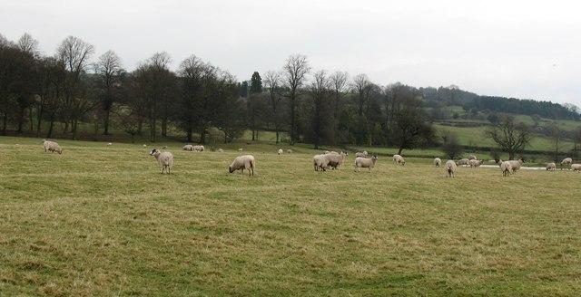 Ridge and furrow in Hauxwell Park