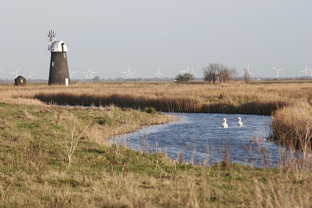 Swans on Halvergate Fleet