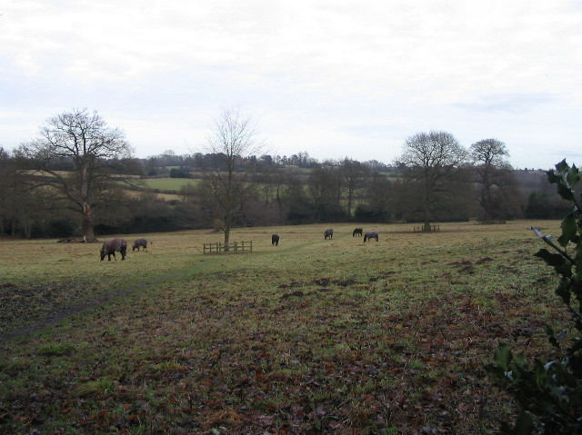 Horses grazing, Sherbourne Valley