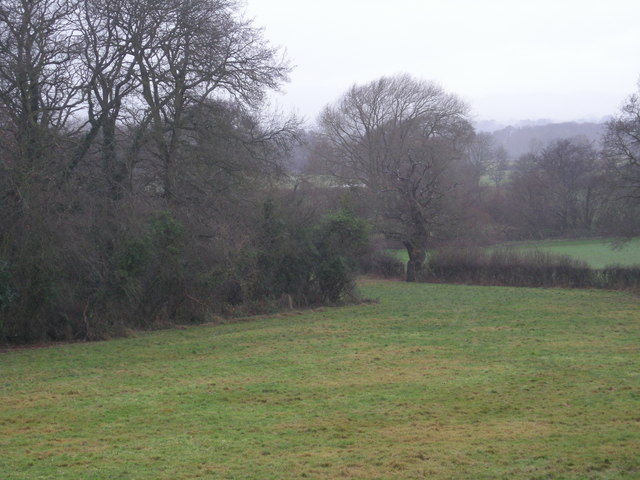 Northern corner of Fox Covert in the rain.