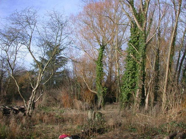 Clare Wood wildlife area