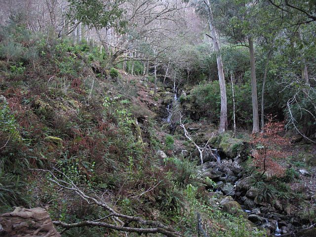 Policy woodlands, Kinloch Hourn