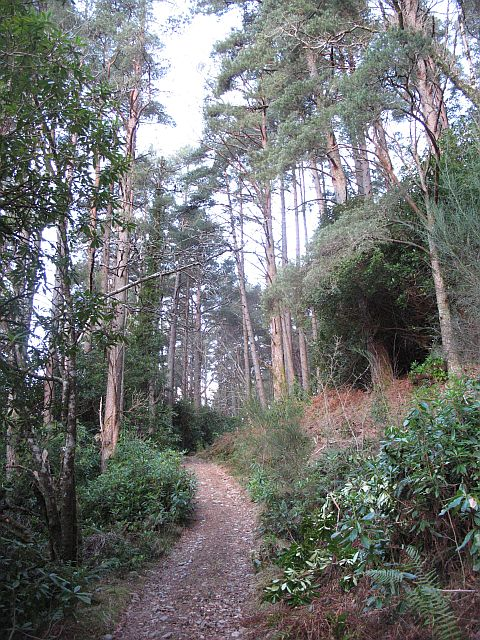 Policy woodlands, Kinloch Hourn
