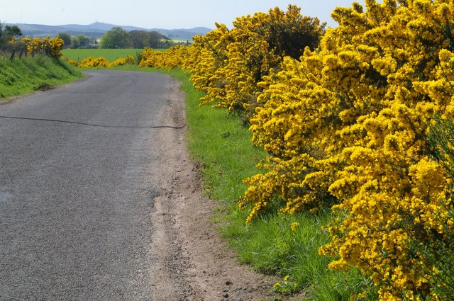Part of the Benzil to Forfar Road in Summer
