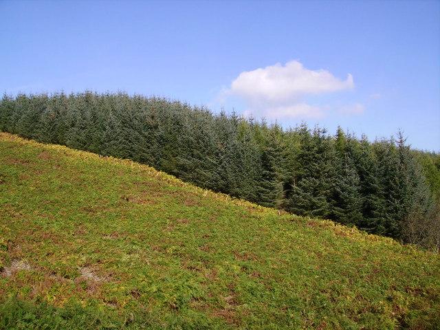 Bracken and Pine