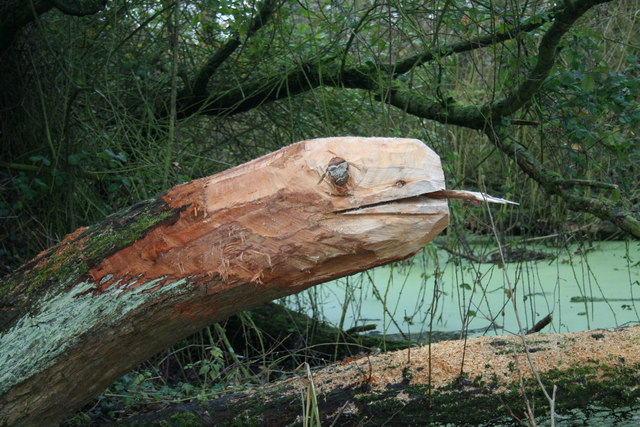 Carved snake in Hagg Lane Ponds