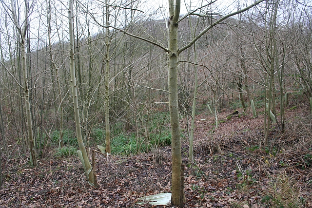 Young Plantation, Swinyard Hill