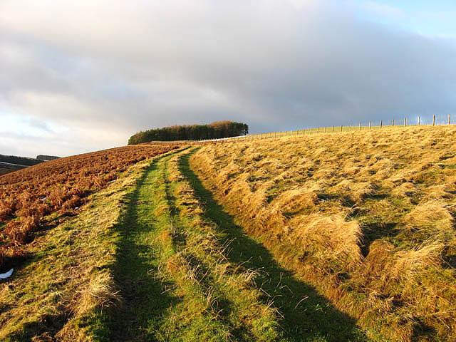 A grass access track