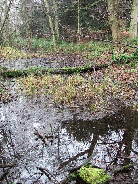 Marshy woodland, Clumber