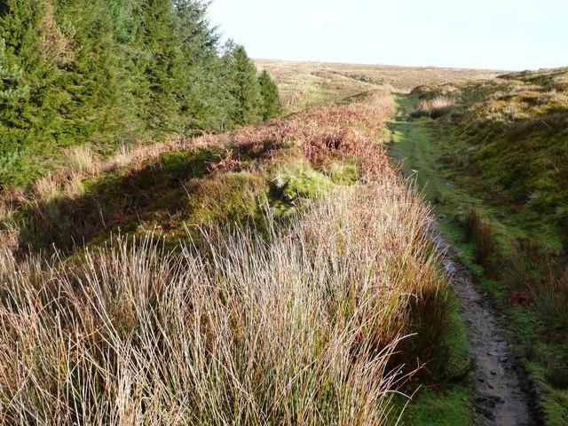 Path to Mynydd Maen