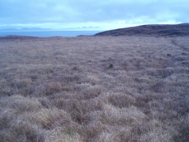 Tussocks and Bog