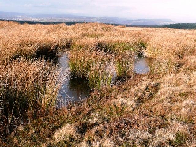 Pond on Mynydd Maen