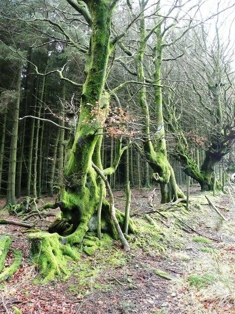 Craig y Glyn forest