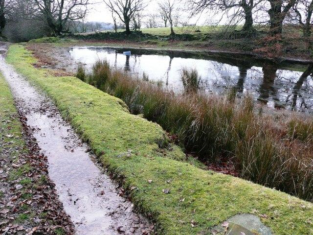 Pond at Rhyswg-ganol