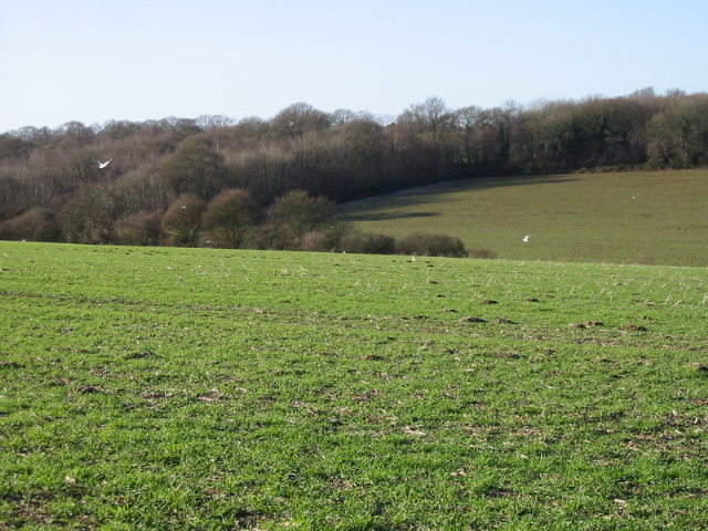 View across the fields to Stafflands Wood