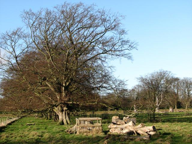 Pasture on Blickling Estate
