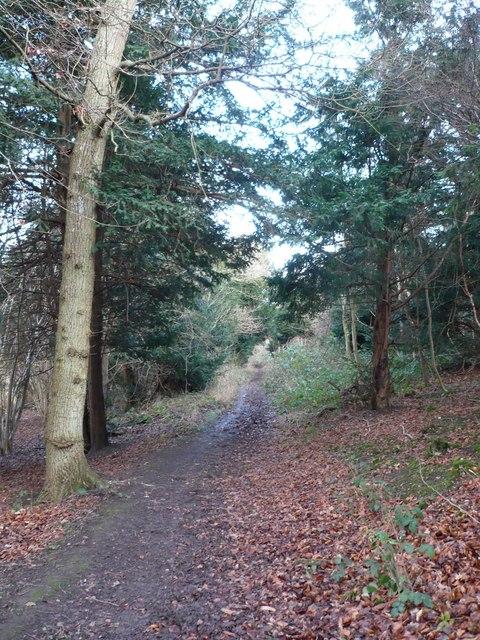 Bridleway near Pett Dane